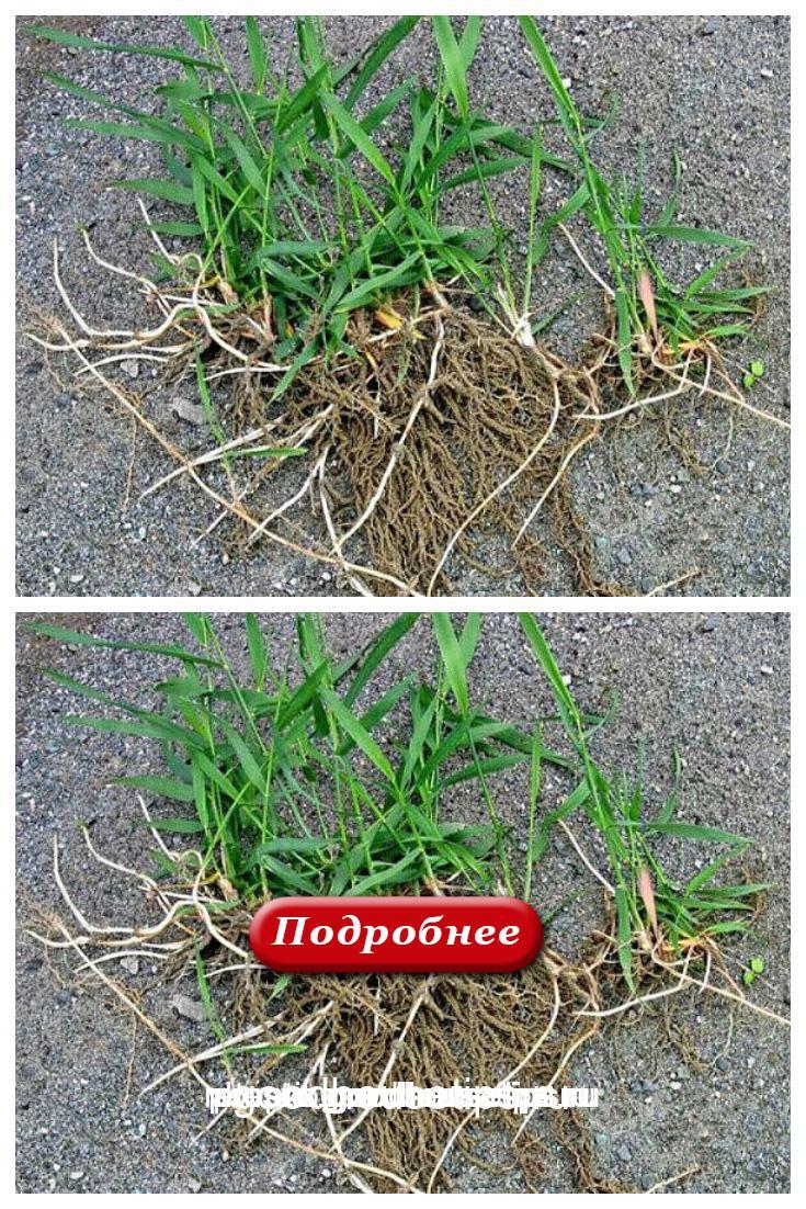 Скоро начнётся активный рост трав. Поэтому, думаю, многим кстати придутся советы монастырской травницы Е. Ф. Зайцевой.