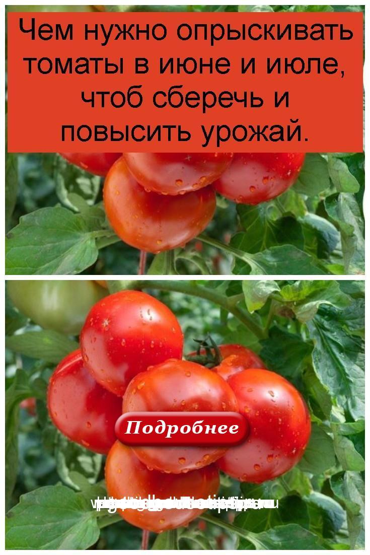 Чем нужно опрыскивать томаты в июне и июле, чтоб сберечь и повысить урожай 4