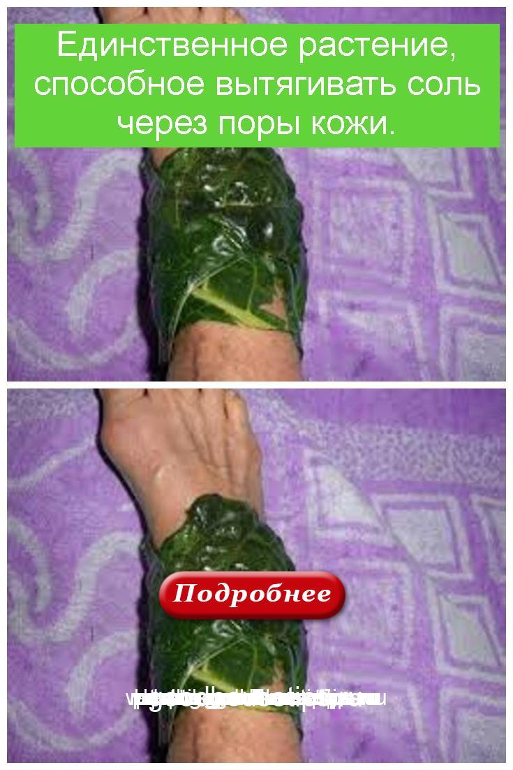 Единственное растение, способное вытягивать соль через поры кожи 4