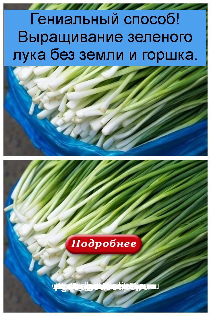 Гениальный способ! Выращивание зеленого лука без земли и горшка 4