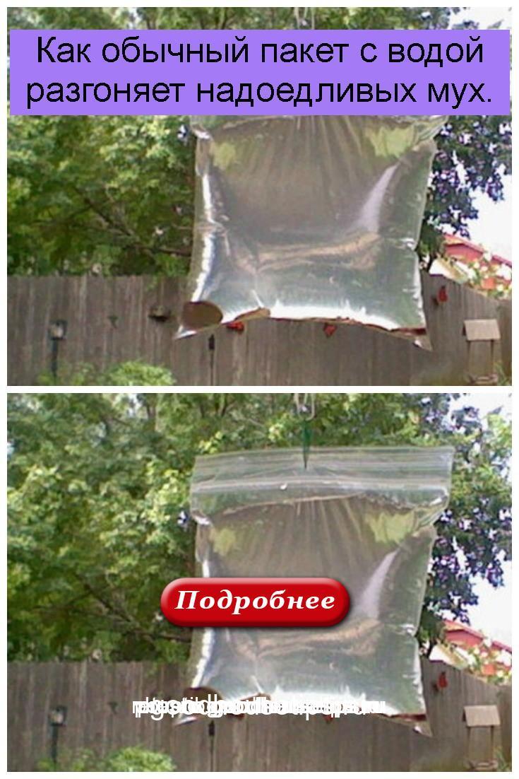 Как обычный пакет с водой разгоняет надоедливых мух 1
