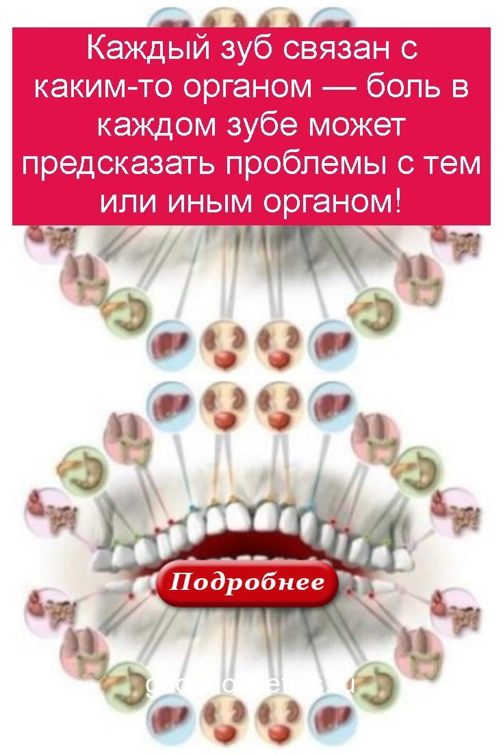 Каждый зуб связан с каким-то органом — боль в каждом зубе может предсказать проблемы с тем или иным органом 4