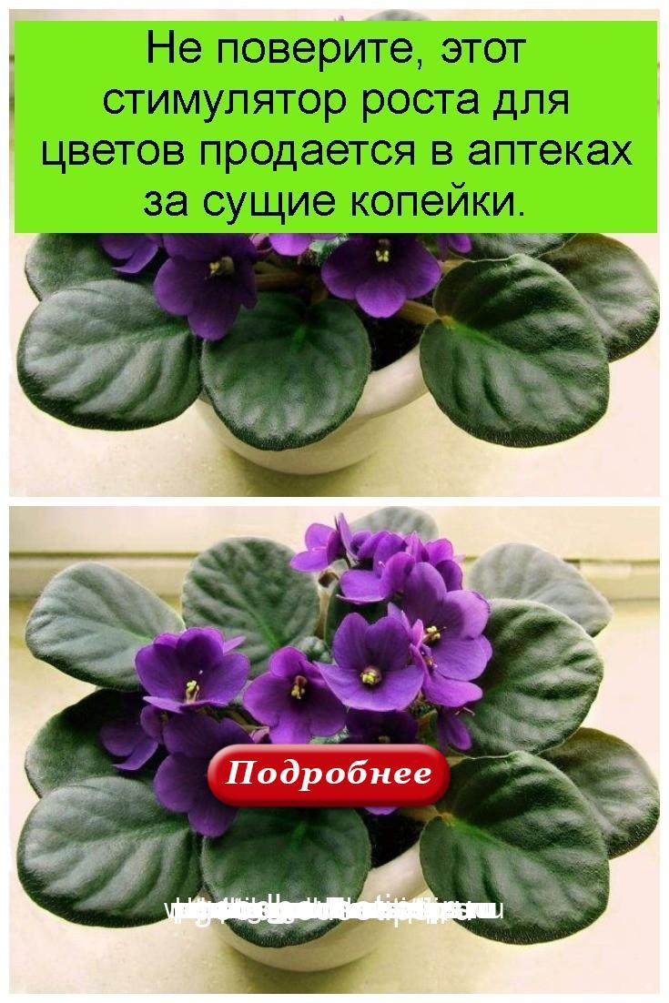 Не поверите, этот стимулятор роста для цветов продается в аптеках за сущие копейки 4
