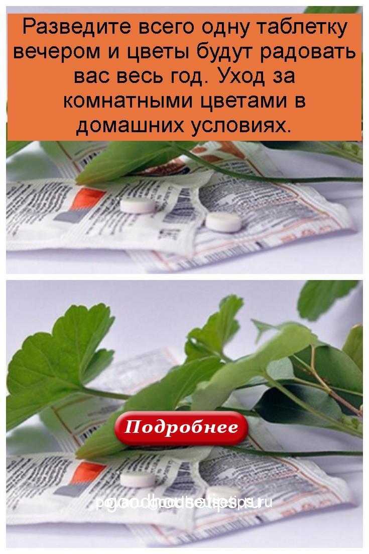 Разведите всего одну таблетку вечером и цветы будут радовать вас весь год. Уход за комнатными цветами в домашних условиях 4
