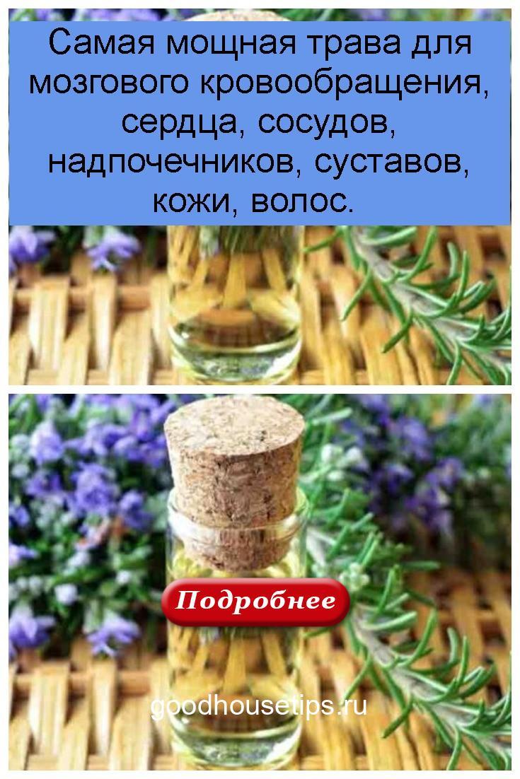 Самая мощная трава для мозгового кровообращения, сердца, сосудов, надпочечников, суставов, кожи, волос 4
