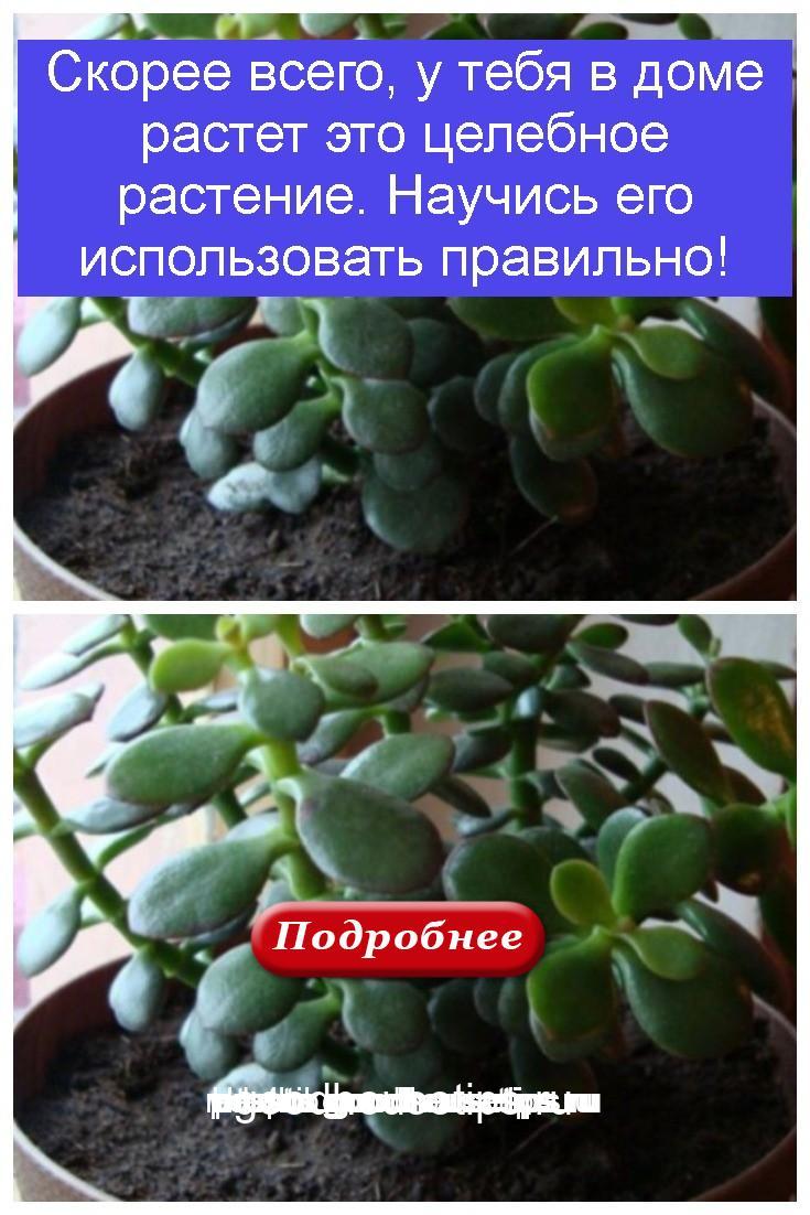 Скорее всего, у тебя в доме растет это целебное растение. Научись его использовать правильно 4