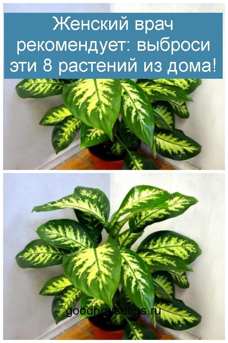 Женский врач рекомендует выброси эти 8 растений из дома 4