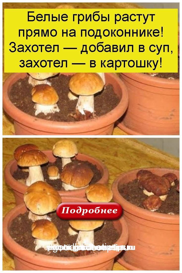 Белые грибы растут прямо на подоконнике! Захотел — добавил в суп, захотел — в картошку 4