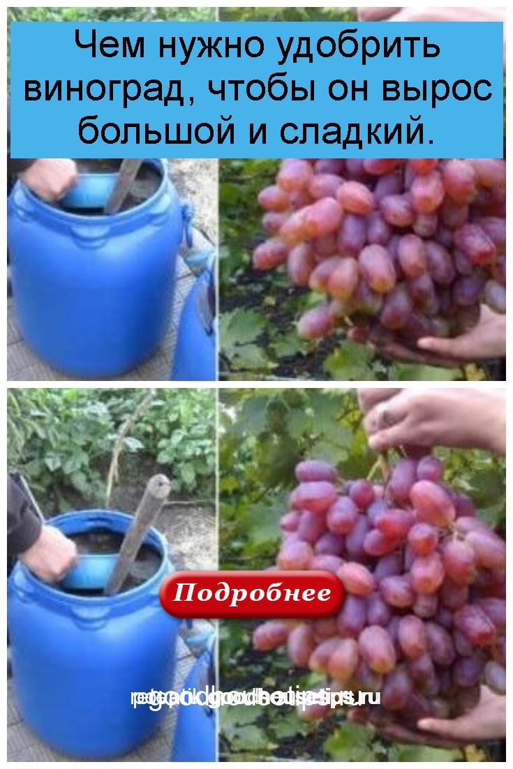 Чем нужно удобрить виноград, чтобы он вырос большой и сладкий 4
