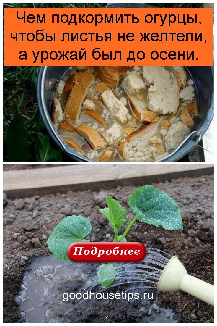 Чем подкормить огурцы, чтобы листья не желтели, а урожай был до осени 4