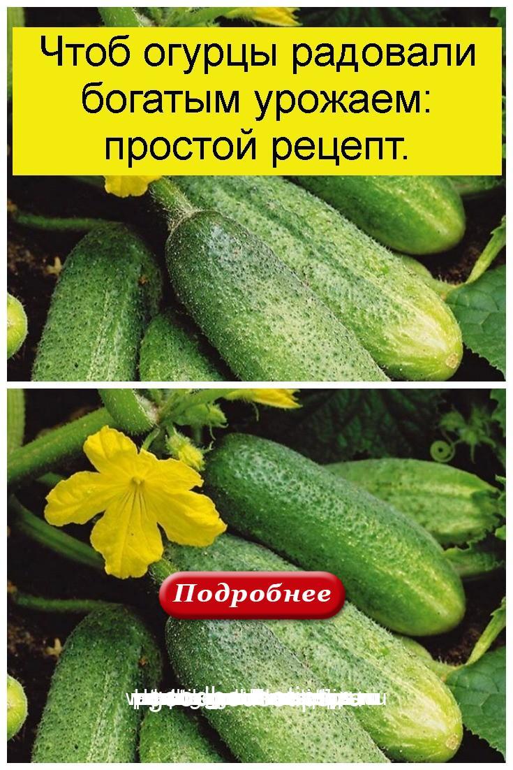 Чтоб огурцы радовали богатым урожаем: простой рецепт 4
