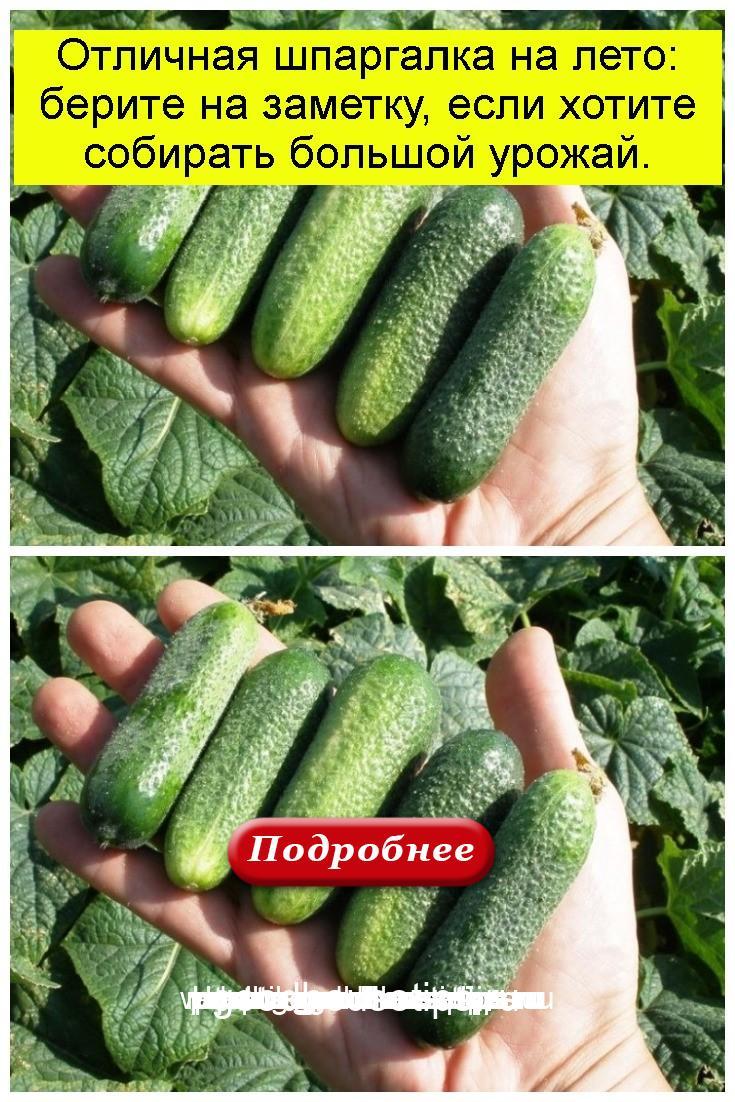 Отличная шпаргалка на лето: берите на заметку, если хотите собирать большой урожай 4