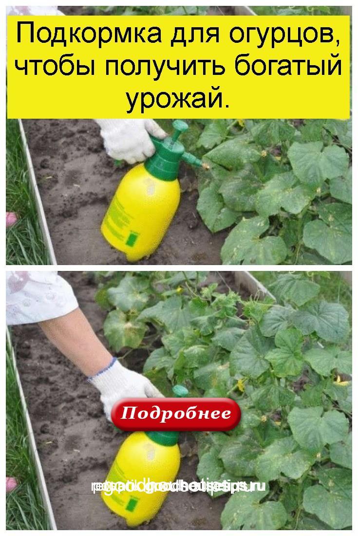 Подкормка для огурцов, чтобы получить богатый урожай 4