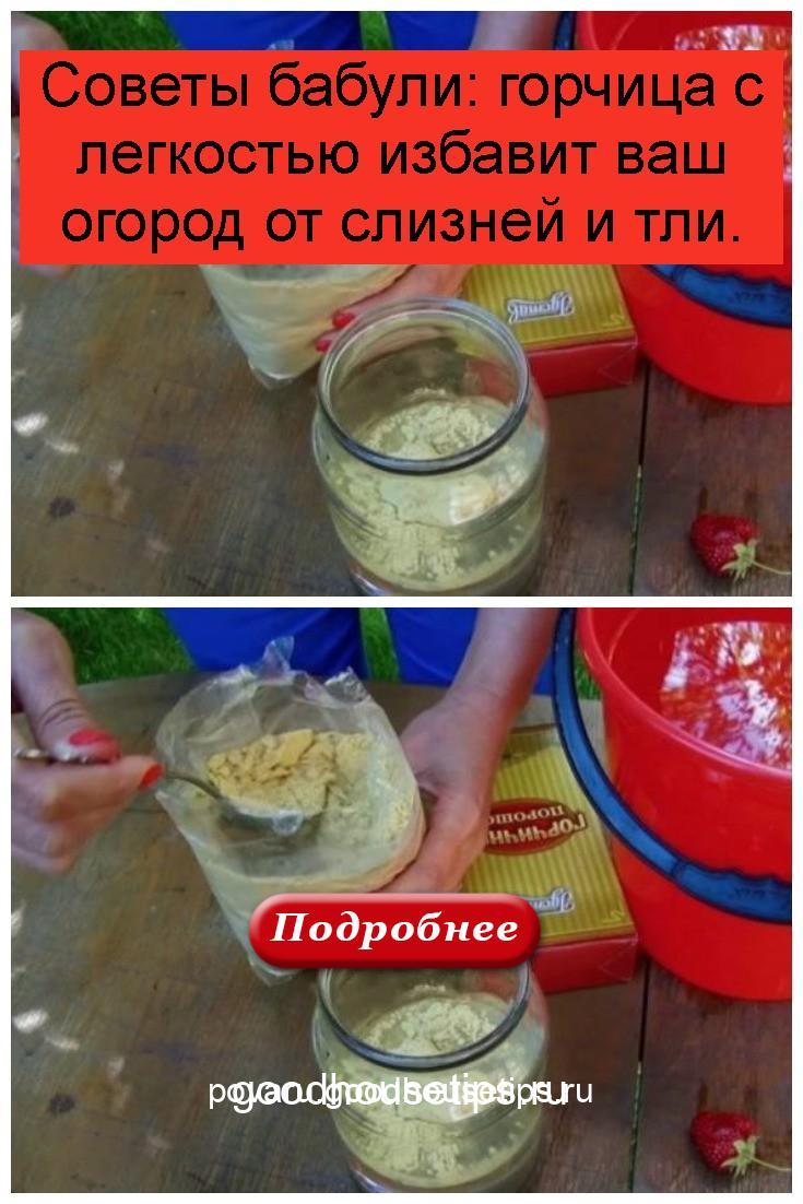 Советы бабули: горчица с легкостью избавит ваш огород от слизней и тли 4