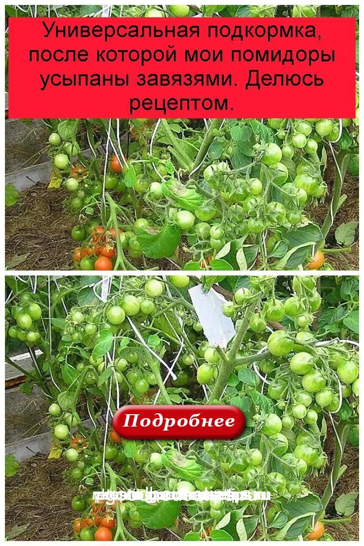 Универсальная подкормка, после которой мои помидоры усыпаны завязями. Делюсь рецептом 4