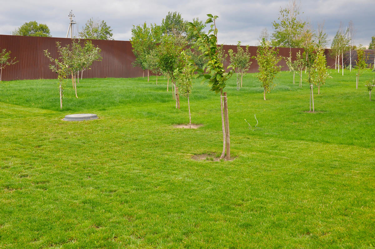 fruit-trees-in-an-orchard