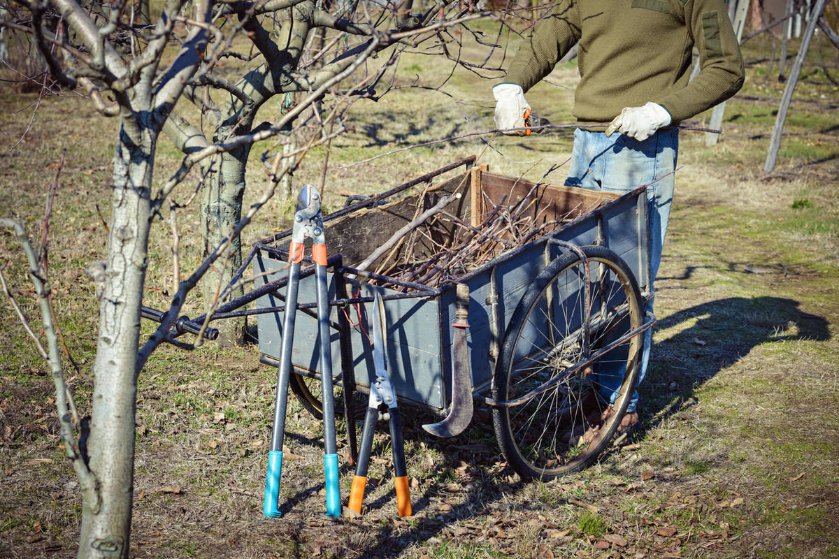 pruner-with-his-tools