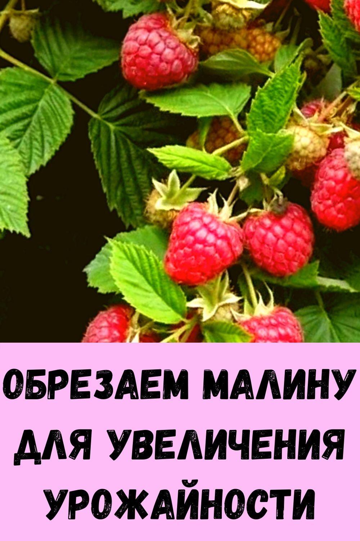 5-domashnih-sredstv-dlya-istseleniya-prostudy-i-grippa-12