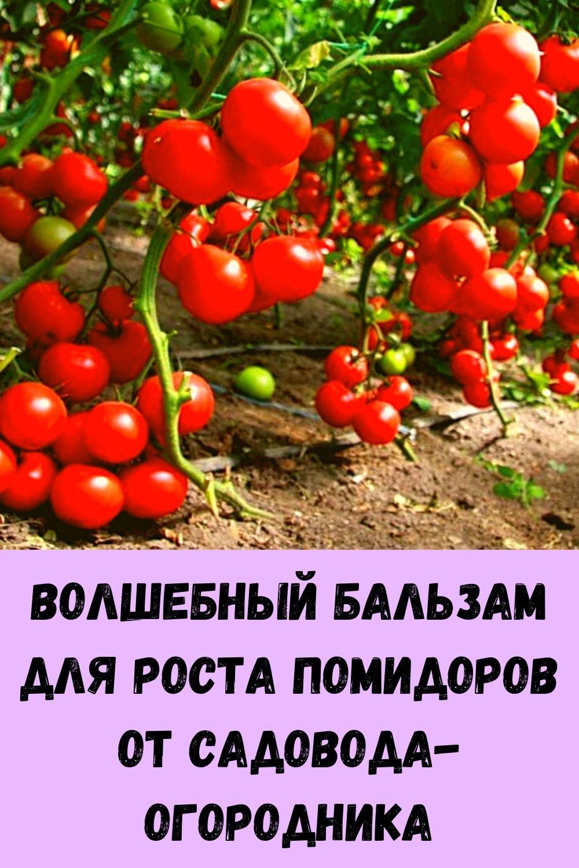domashnie-kotlety-iz-kabachkov-s-farshem-samyy-vkusnyy-retsept-11