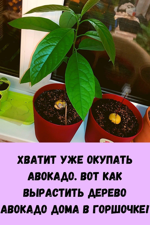 domashnie-kotlety-iz-kabachkov-s-farshem-samyy-vkusnyy-retsept-2