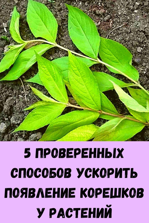 domashnie-kotlety-iz-kabachkov-s-farshem-samyy-vkusnyy-retsept-9