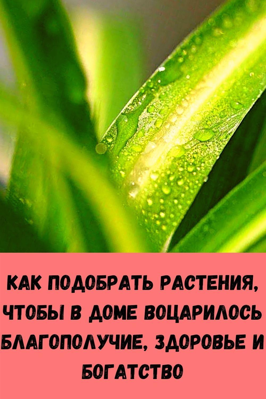 eta-molitva-sposobna-za-minuty-snyat-lyubuyu-bol-11