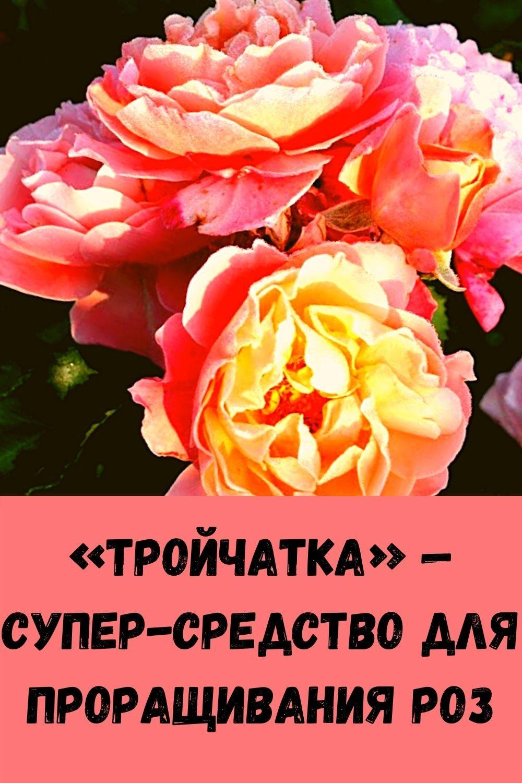 eta-molitva-sposobna-za-minuty-snyat-lyubuyu-bol-4