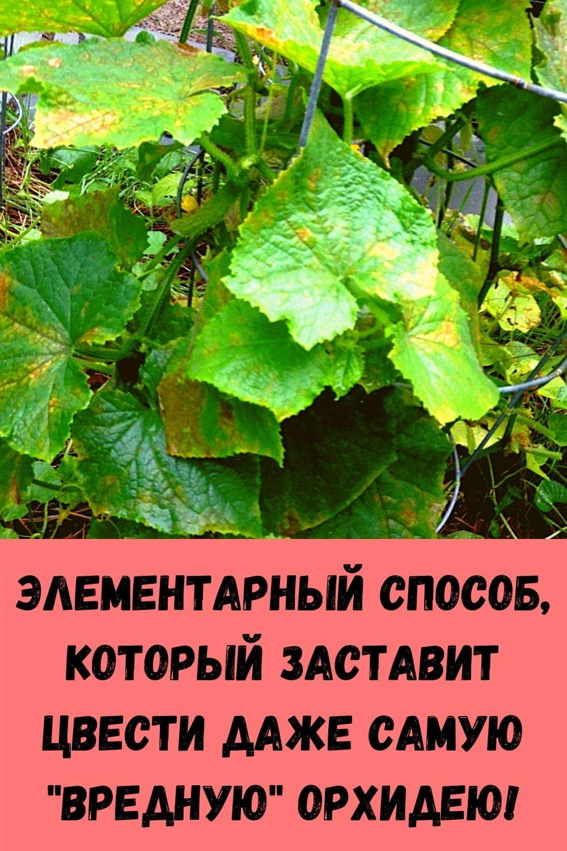eta-molitva-sposobna-za-minuty-snyat-lyubuyu-bol-5