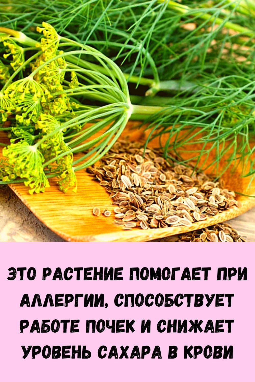 eto-rastenie-pomogaet-pri-allergii-sposobstvuet-rabote-pochek-i-snizhaet-uroven-sahara-v-krovi-2