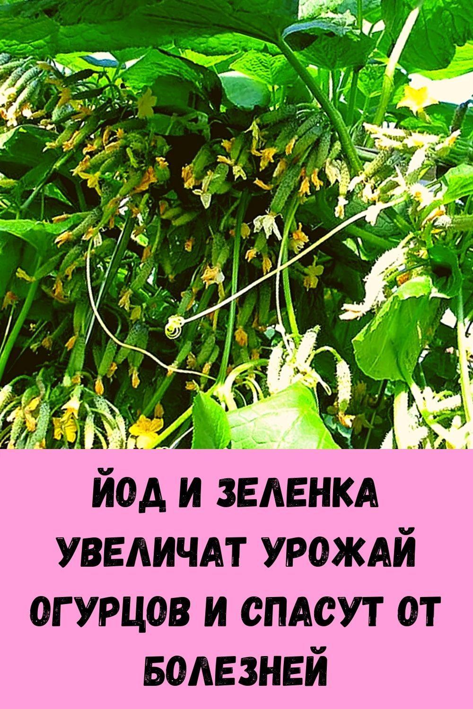 eto-sredstvo-boretsya-s-dryablostyu-kozhi-na-zavist-plasticheskim-hirurgam-6