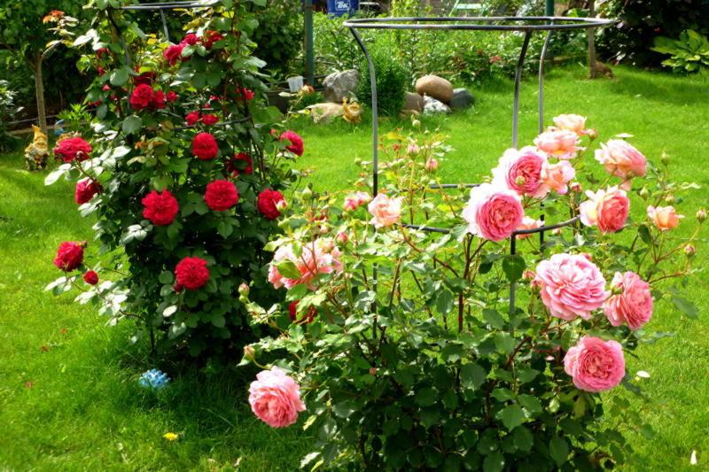 gardens_roses_424215