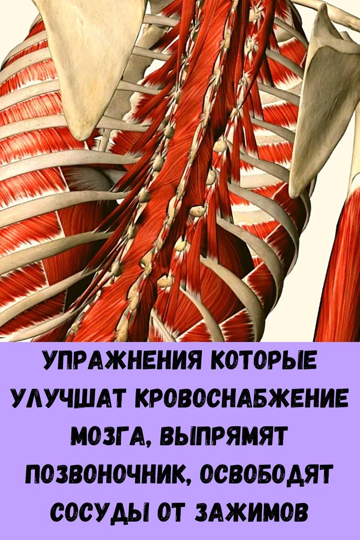 hotite-byt-zdorovym-dolgozhitelem-regulyarno-podogrevayte-pechen-1