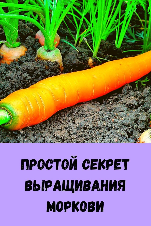 hotite-byt-zdorovym-dolgozhitelem-regulyarno-podogrevayte-pechen-5