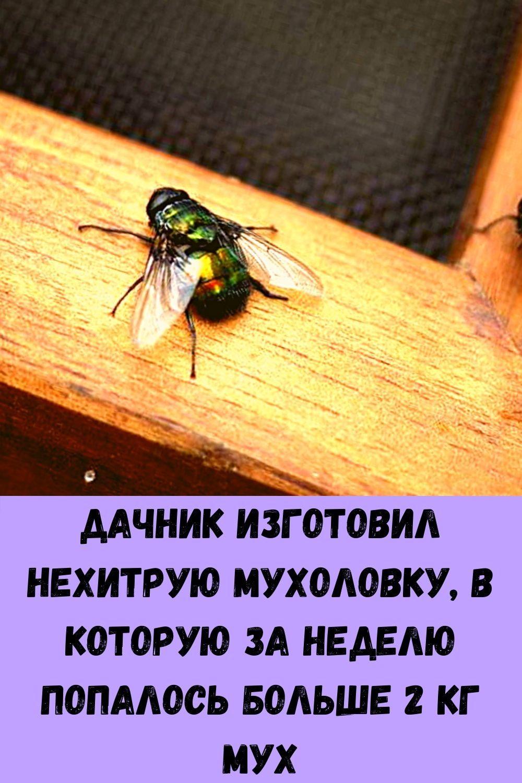 hotite-byt-zdorovym-dolgozhitelem-regulyarno-podogrevayte-pechen-6