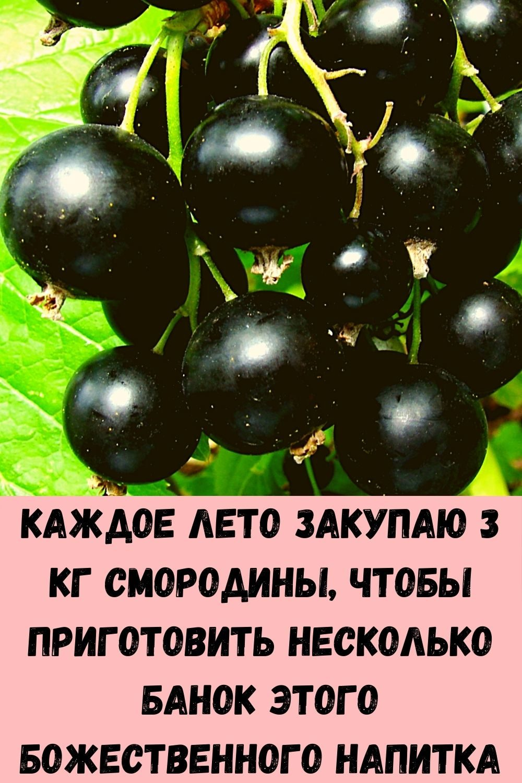 imbirnaya-voda-glavnyy-vrag-zhira-na-bedrah-i-zhivote_-kak-ee-pravilno-prigotovit-6