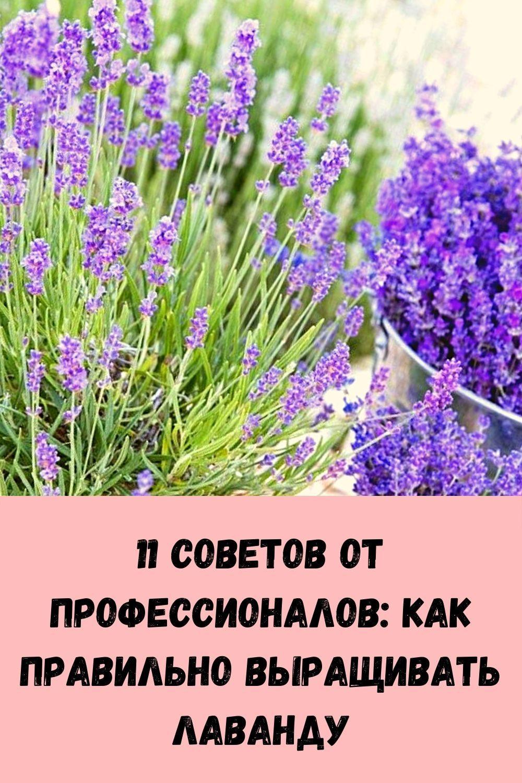 imbirnaya-voda-glavnyy-vrag-zhira-na-bedrah-i-zhivote_-kak-ee-pravilno-prigotovit-7