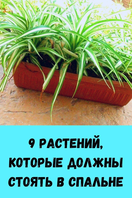 izbavtes-ot-mochevoy-kisloty-i-vylechite-podagru-s-pomoschyu-10-naturalnyh-sredstv-14
