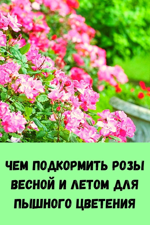 kak-umenshit-zhivot-uzhe-k-vecheru-2