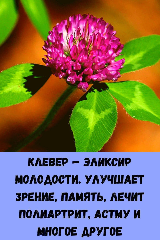 klever-eliksir-molodosti-uluchshaet-zrenie-pamyat-lechit-poliartrit-astmu-i-mnogoe-drugoe-2