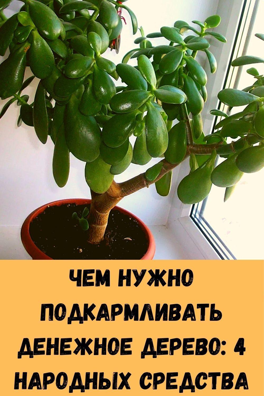 klubnichnoe-varene-kak-marmelad_-6-luchshih-retseptov-dlya-nastoyaschih-tseniteley-1