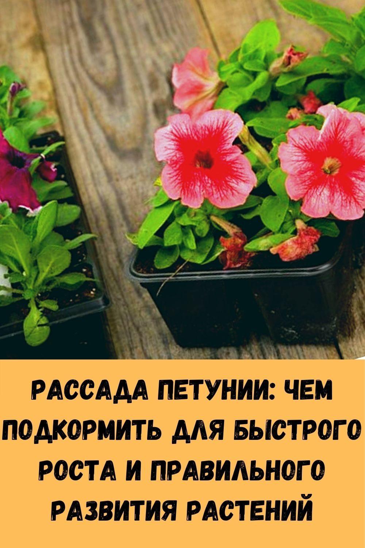 klubnichnoe-varene-kak-marmelad_-6-luchshih-retseptov-dlya-nastoyaschih-tseniteley-14