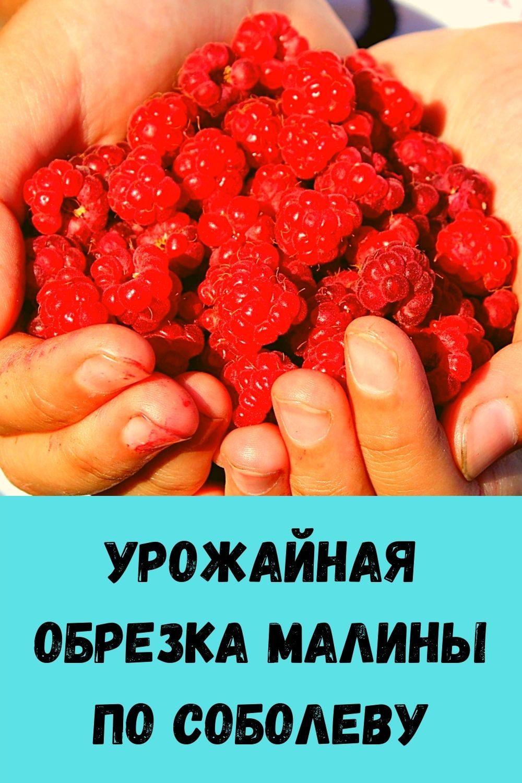 moy-metod-vyraschivaniya-sochnogo-ukropa-bez-zontika-5