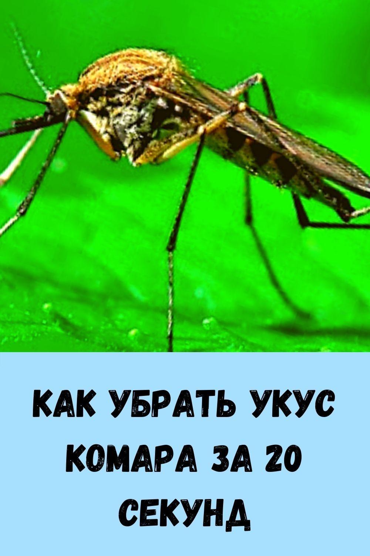 nalivnoy-pirog-s-tvorogom-etot-pirog-sedaetsya-migom-esche-prosyat-dobavki-4