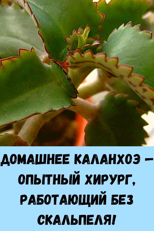 nalivnoy-pirog-s-tvorogom-etot-pirog-sedaetsya-migom-esche-prosyat-dobavki-8