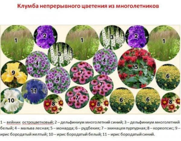 nizkoroslye-cvety-dlja-klumby-kotorye-budut-cvesti-vse-leto-0806473
