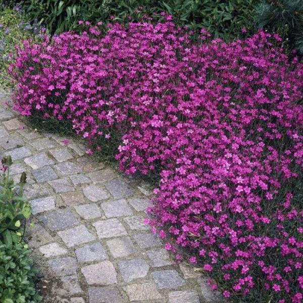 nizkoroslye-cvety-dlja-klumby-kotorye-budut-cvesti-vse-leto-2dbad33