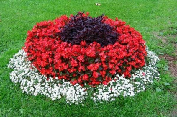 nizkoroslye-cvety-dlja-klumby-kotorye-budut-cvesti-vse-leto-2f2ef8d