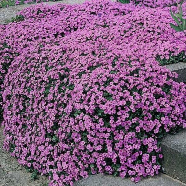 nizkoroslye-cvety-dlja-klumby-kotorye-budut-cvesti-vse-leto-320001c