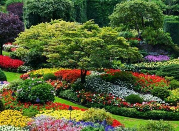 nizkoroslye-cvety-dlja-klumby-kotorye-budut-cvesti-vse-leto-34ff671