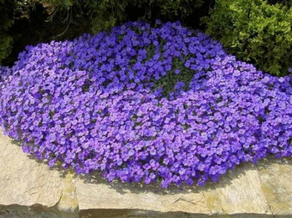 nizkoroslye-cvety-dlja-klumby-kotorye-budut-cvesti-vse-leto-3930f0a